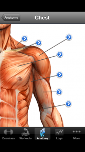 Kroppens anatomi zoom
